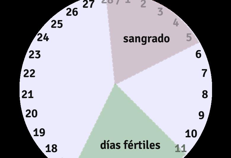 Dias fertiles en un ciclo menstrual de 28 dias